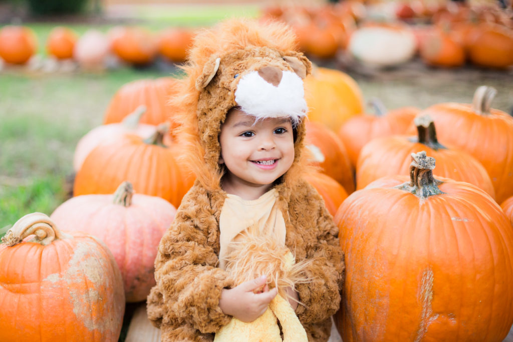 Toddler Boy in Lion Halloween Costume in a Pumpkin Patch